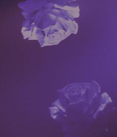 Las 4 etapas de una relación ¿Cómo evoluciona el amor?